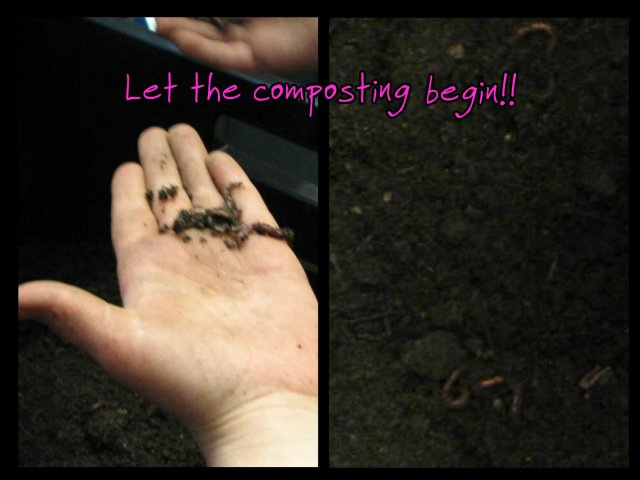 worm_compost2