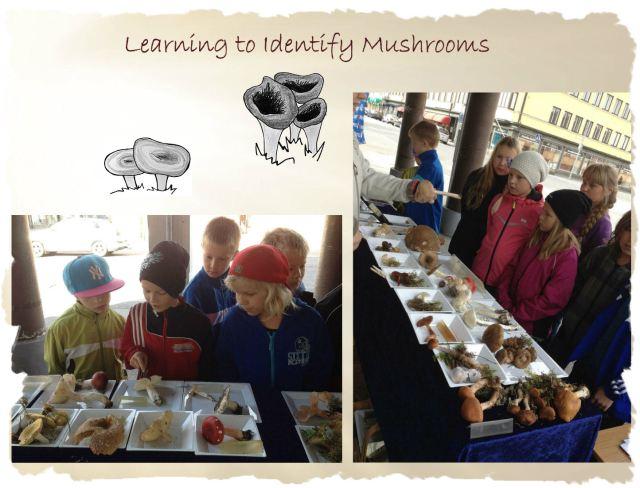 mushroom_id2_b
