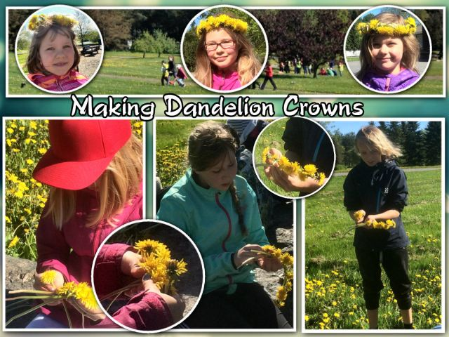 dandelion day1