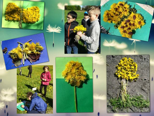 dandelion day2