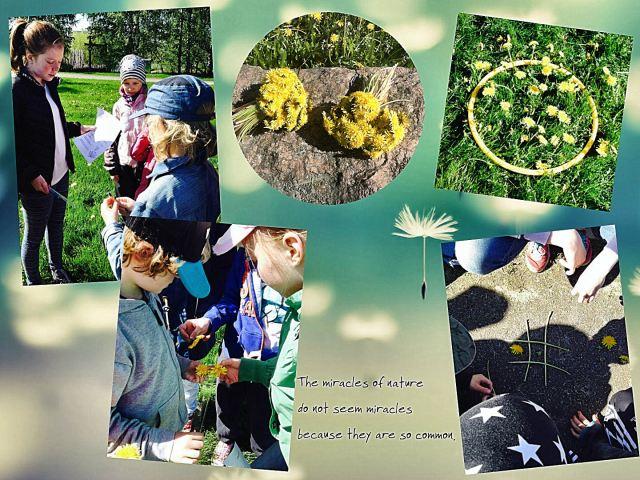 dandelion day5