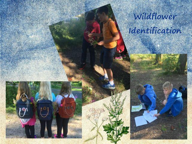 5EN_wildflowers1