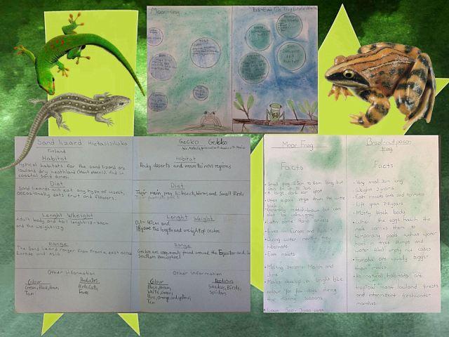 frog_comparisons