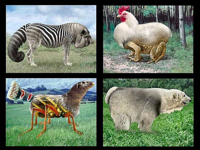animals_3