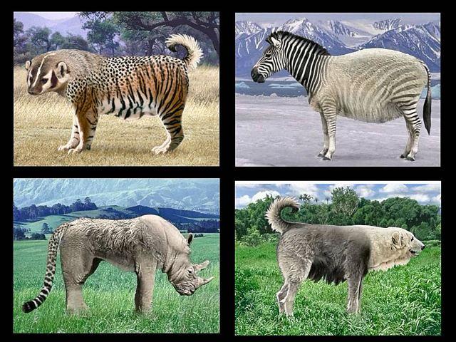 animals_4
