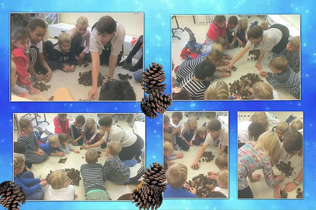pine-cone-counting2