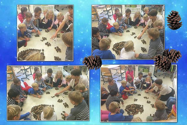 pine-cone-counting3
